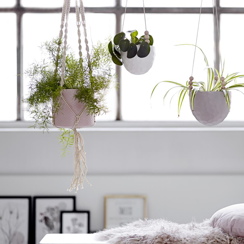 Hanging House Plants Pictures Mia Design Studio Hanging