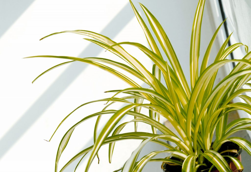 Source: http://www.hollandpark.com/home/resource-centre/how-to-tips/how-to-clean-air-plants.html