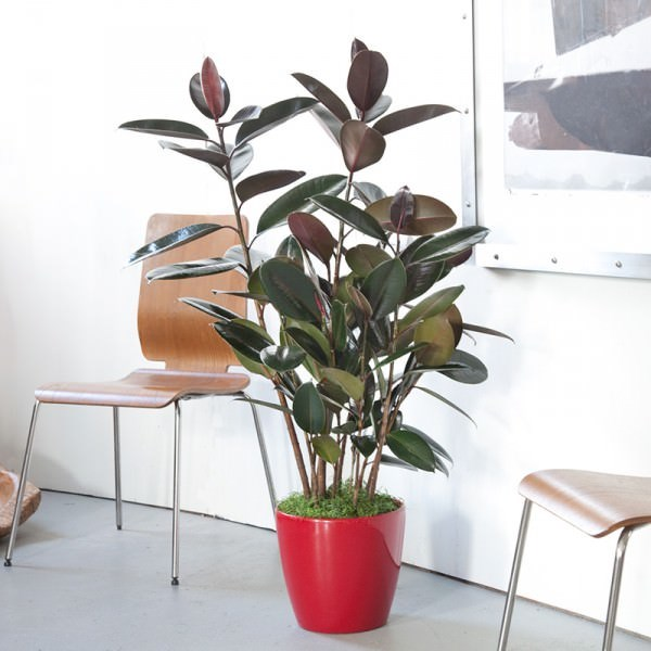 http://www.decoroutdoor.com.au/component/content/article/89-news/76-the-15-easiest-indoor-house-plants-for-everyone