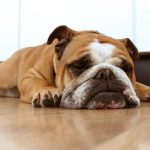 Is yours one of the top dogs for apartment living?