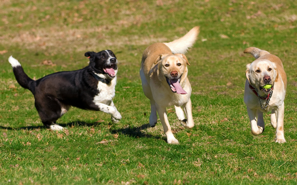 Be smart at the dog park and avoid the cold shoulder